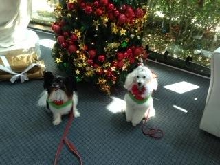 Jacksons Children's Hospital Christmas Visit