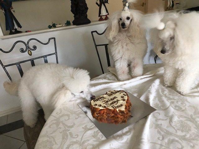 Birthday Cake – Thanks Sassy Pet Treats